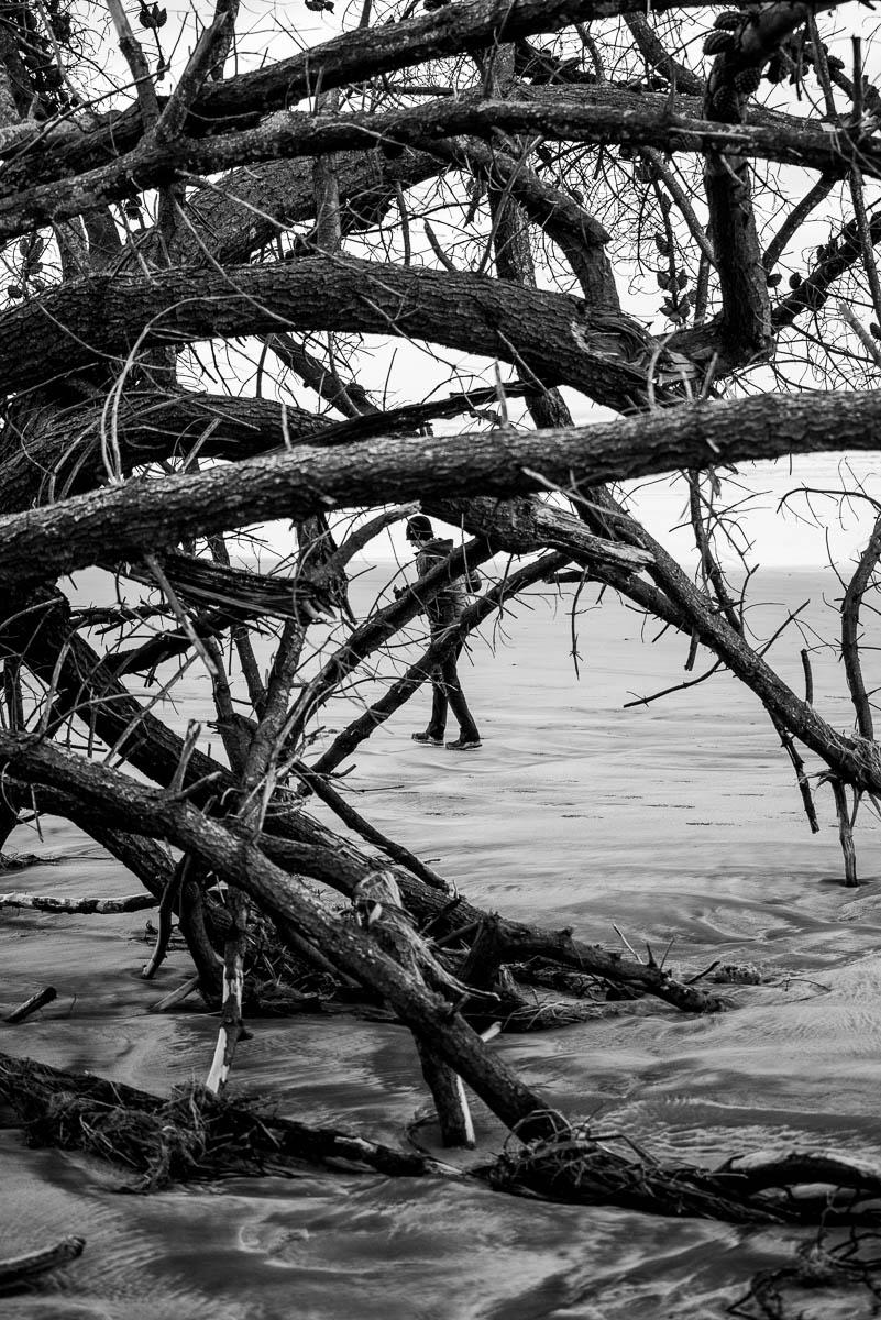 Carters Beach Westport fallen tree