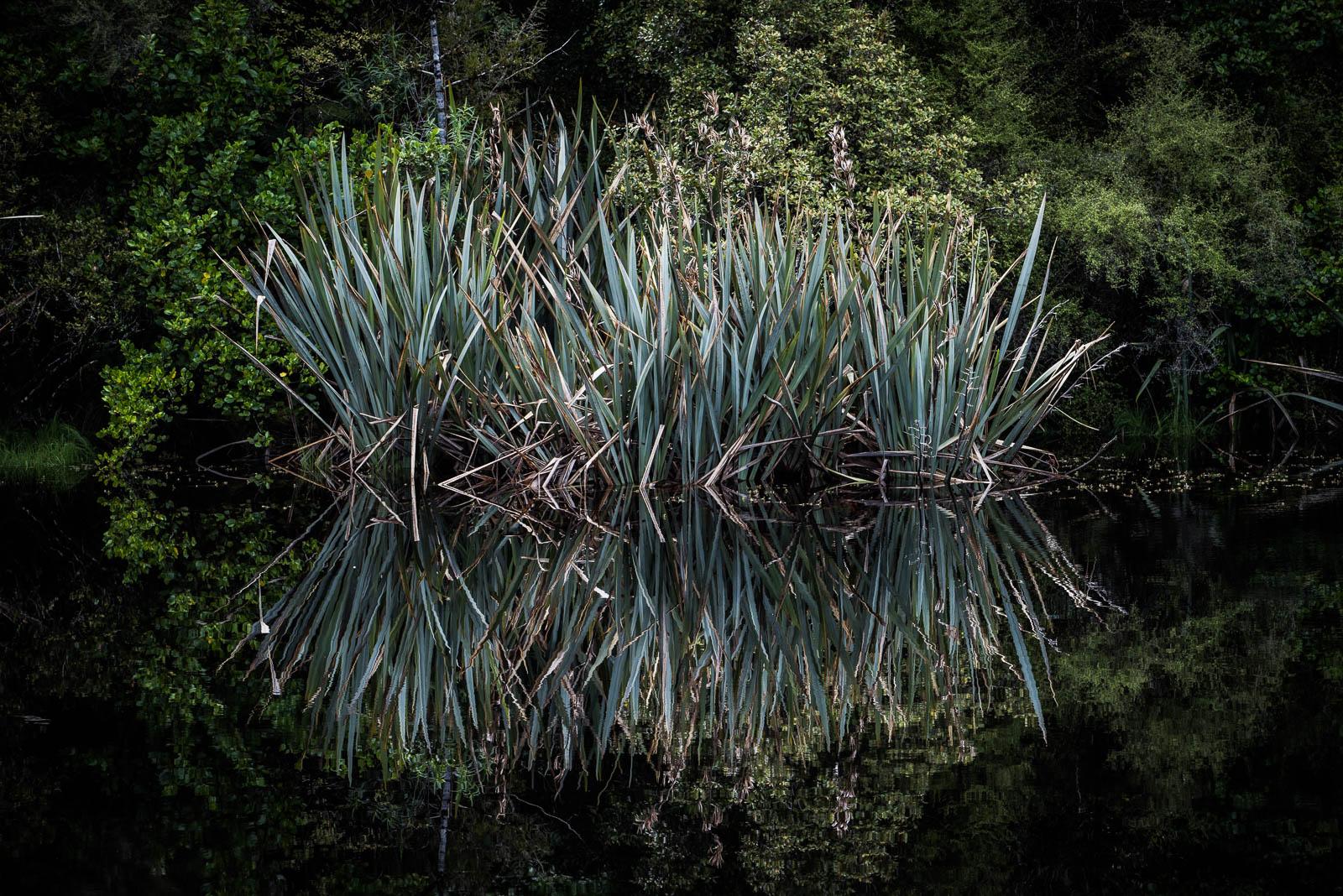 Lake Matheson reflection grass dark water