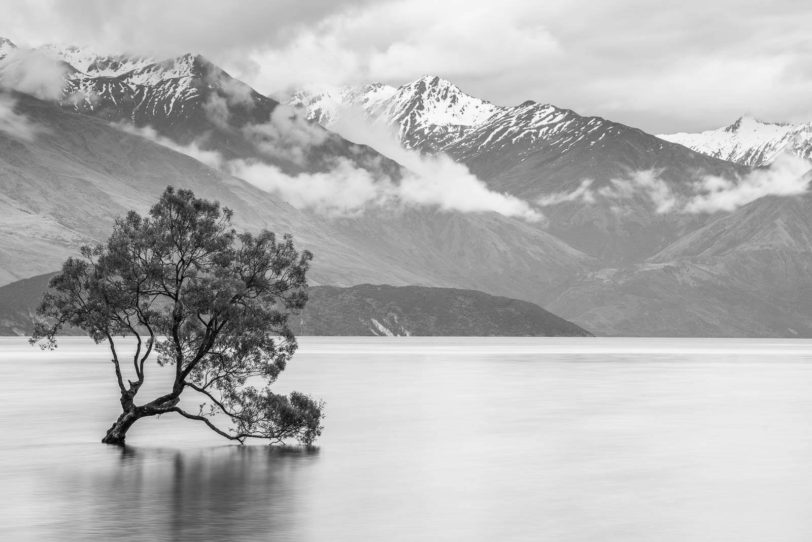 Lake Wanaka The Wanaka Tree That