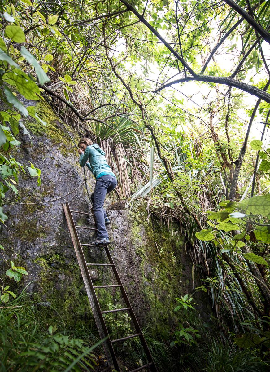 Motukiekie Beach access trail ladder